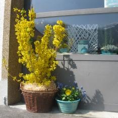Frühling in Irschen