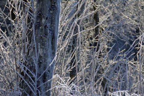 umhuellt-vom-frost
